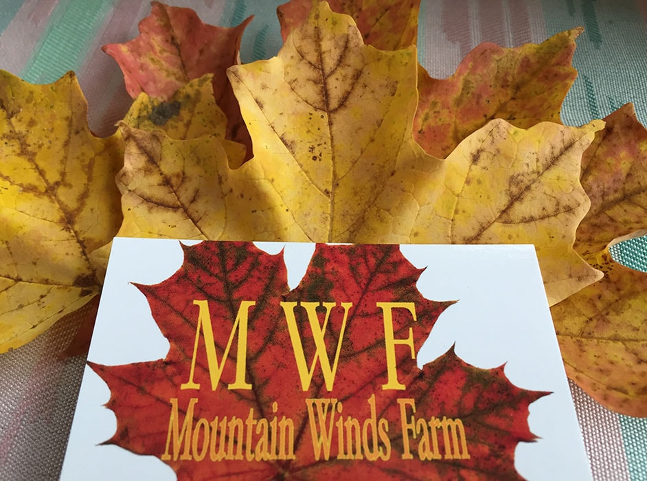 mountain winds farm business card on fall maple leaf